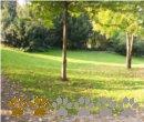 Vorschaubild Alter Elbpark