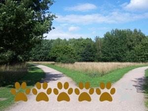 Hundewiese Auf dem Vossbarg